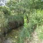 Recuperació de la vegetació de ribera afectada per l'incendi del 2009 al Riu Canaletes i tributaris