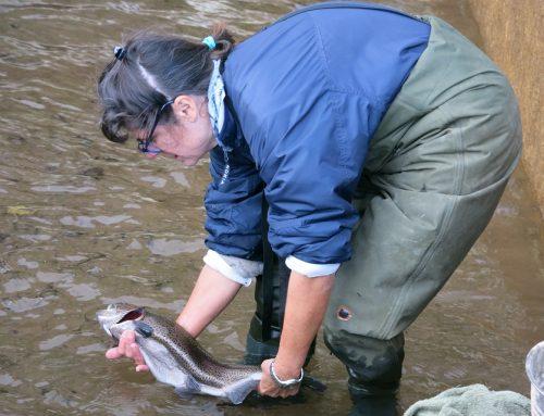 Ajudant a nèixer peixets …