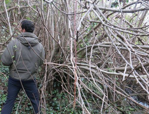 14-02-17 Visita de valoració ambiental del Parc Natural dels Ports a la Font de l'Ullal