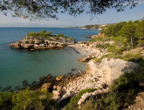 El 10 de juny organitzem una gimcana a l'Ametlla de Mar com a una de les 8 accions principals de la Setmana de la Natura