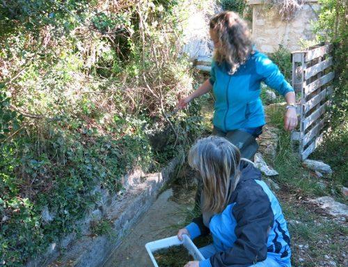 Mostrejos estacionals de qualitat d'aigua  als Tolls i a l'Ullal.  Programa de custòdia i biodiversitat.