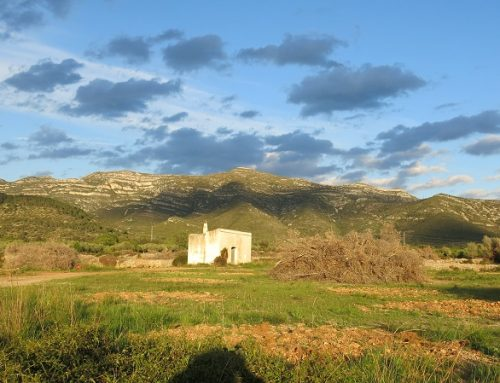 La custòdia com a estratègia de conservació d'oliverars